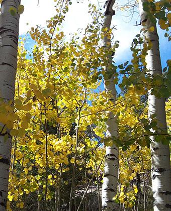 Aspen Trees - Bed & breakfasts & inns of Colorado Association